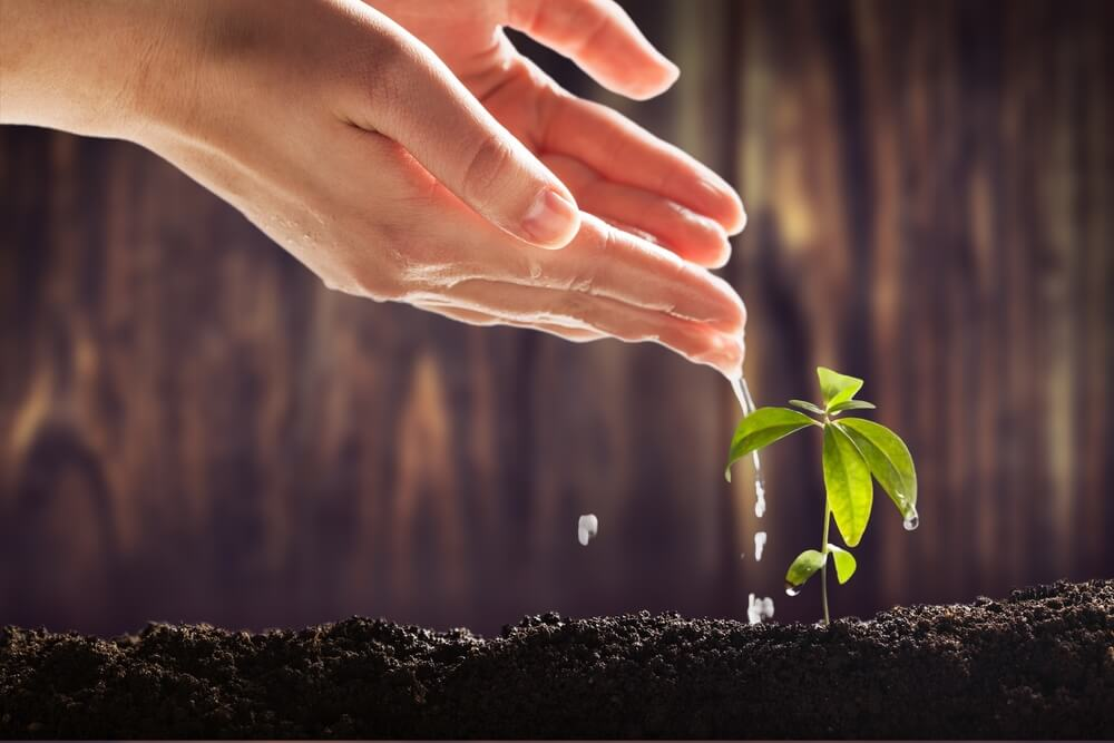 Importance of Professional Growth Plans
