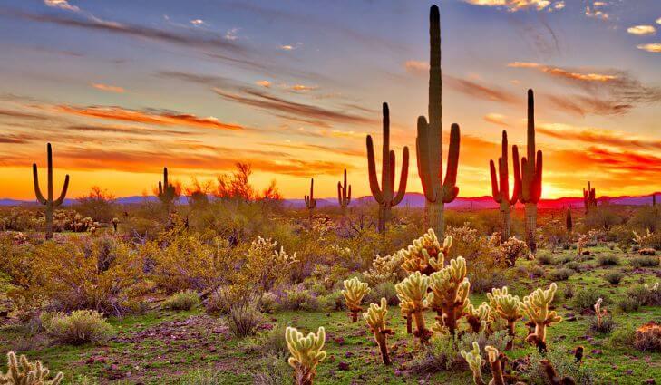 Jobs, Jobs, and More Jobs in Phoenix East Valley