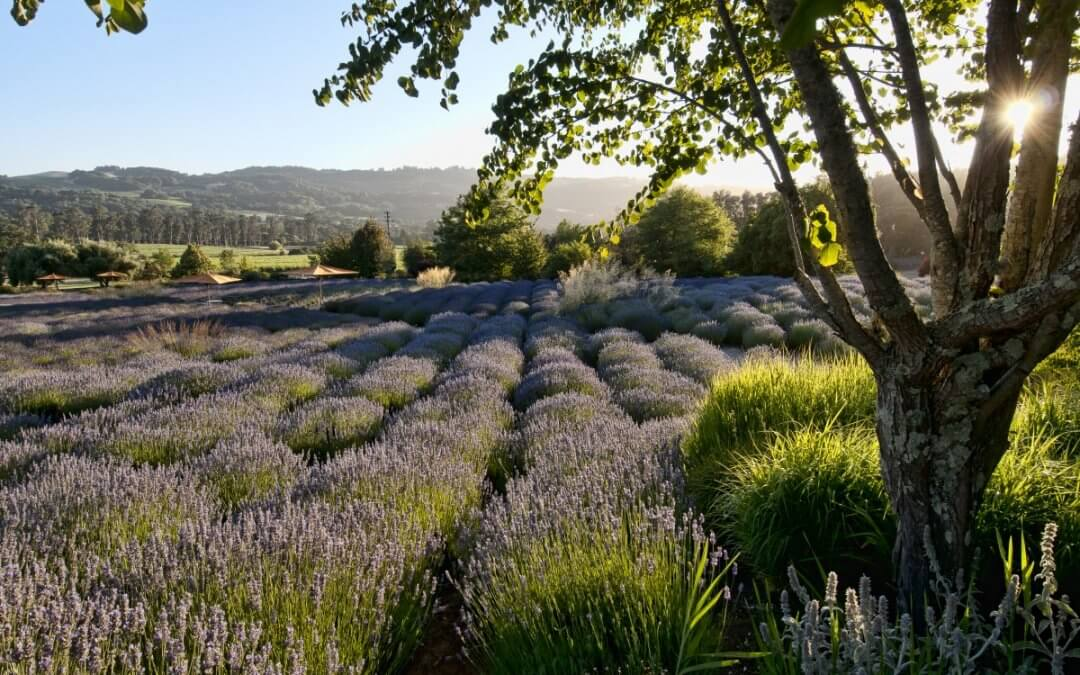 Good Things Are Happening in Sonoma County, California