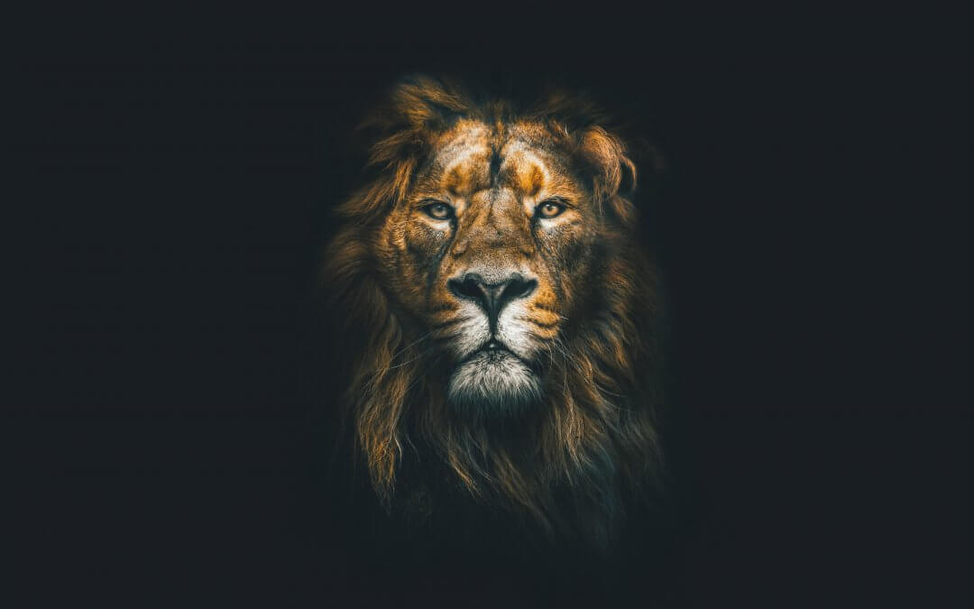 Unleash the Lion Within – The King of Concrete Jungle